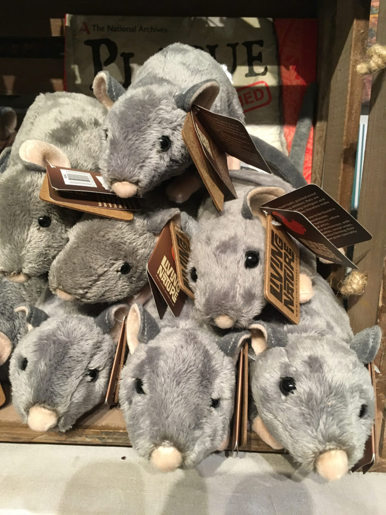 Furry rats in the Eyam Museum shop