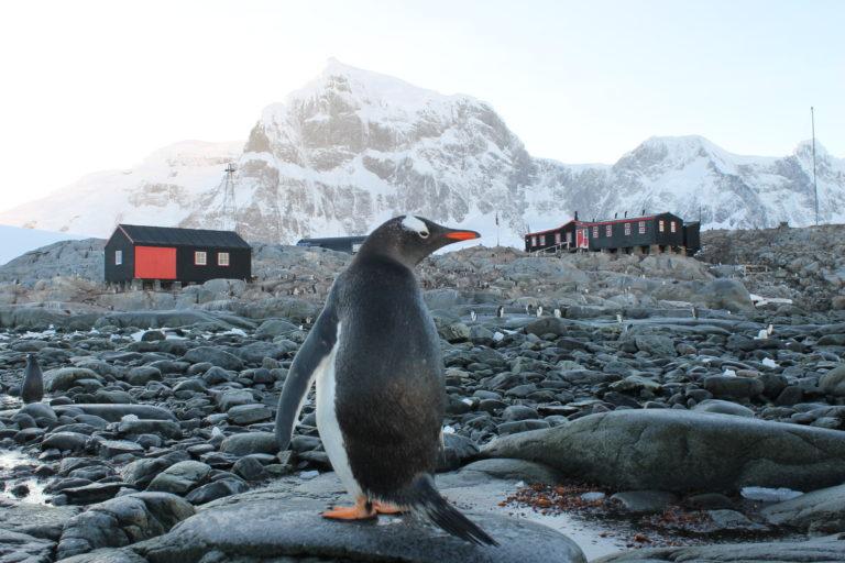 Penguin in front of Port Lockroy